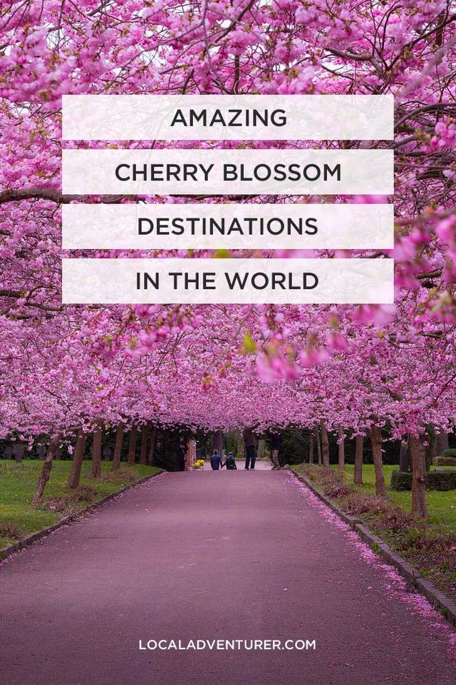 AMAZING PLACES TO SEE CHERRY BLOSSOMS IN THE WORLD