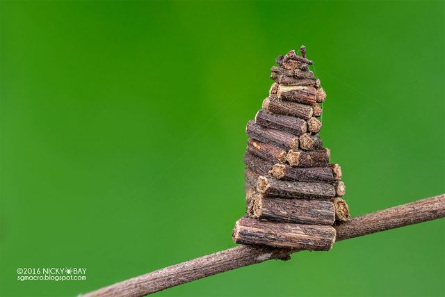 Macro Photographs of Nature's Tiniest Architects by Nicky Bay