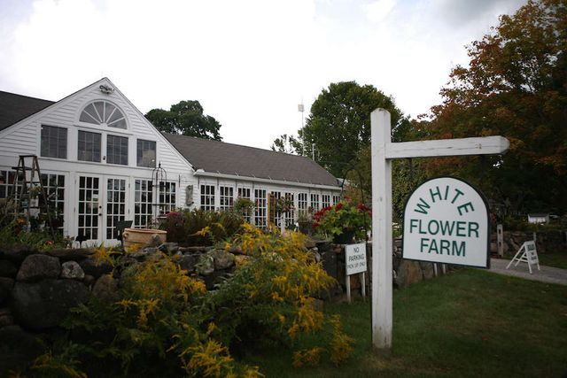 One week away the great tomato celebration at white flower farm above white flower farm is located at 167 litchfield road in morris connecticut mightylinksfo Gallery