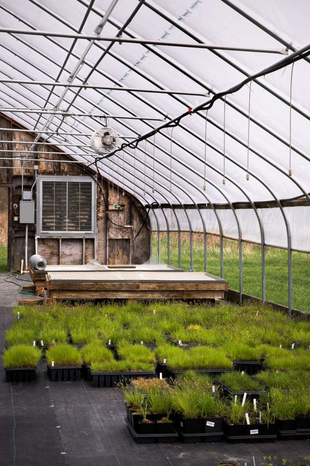 Nasami Farms: A New England Mecca for Native Plant Lovers