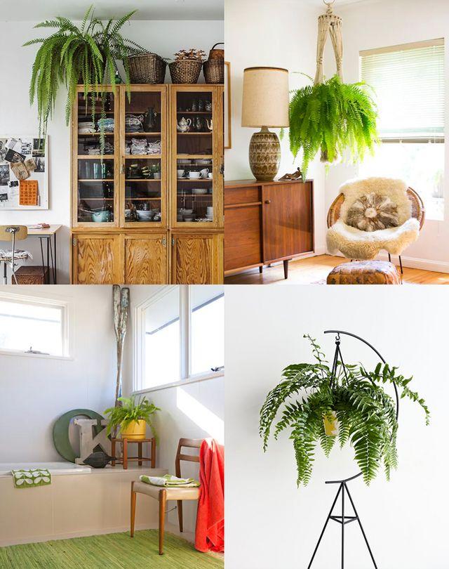 10 plantas que necesitas tener en casa   Milowcostblog   Bloglovin\'