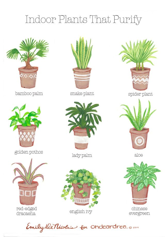 Air Purifying Plants For Bedroom: Simple Natural Living: The Best Air-Purifying Plants For