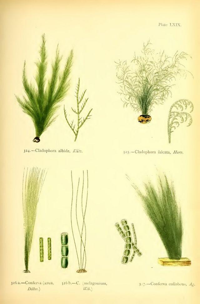 Victorian Marine Biologist Margaret Gatty's Stunning