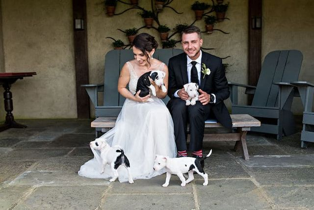 Couple Replaces Wedding Bouquets With Adorable Rescue Puppies